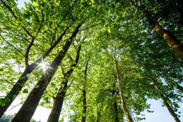Sweco Sverige klimatpositivt 2030.