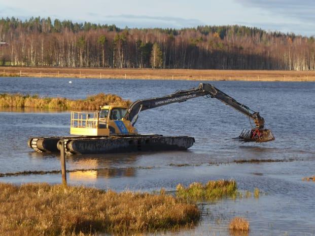 De närmsta två veckorna kommer en flytande grävskopa befria Limsjön i Leksand från vattenaloens grepp.